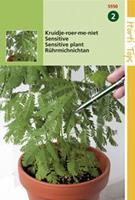 Hortitops Kruidje-Roer-me-niet Mimosa pudica - Bloemzaden - 0,75gram