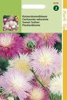 Hortitops Centaurea Moschata Imperialis Gemengd