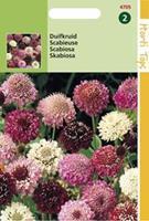 Hortitops Duifkruid Scabiosa atropurpurea - Bloemzaden - 0,5gram