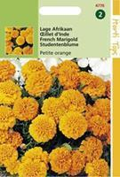 Hortitops Tagetes Patula Nana Petite Orange