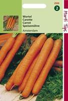 Hortitops Wortelen Daucus carota Amsterdamse Bak 2 - Groentezaden - 5gram