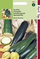 Hortitops Courgette Black Beauty Verte De Milan