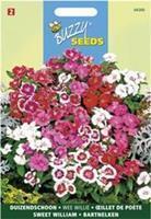 Buzzy Dianthus Barbatus Wee Willie Gemengd