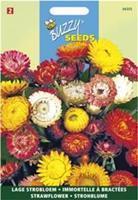Buzzy Helichrysum Bract. Monst. Tom Thumb Gemengd