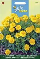 Buzzy Tagetes patula nana Yellow Boy