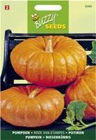 Buzzy seeds zaden pompoen rode van etampes