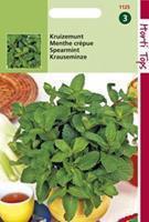 Hortitops Kruizemunt Mentha spicata - Groentezaden - 1g