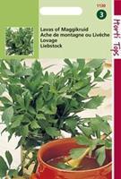 Hortitops Lavas maggiplant