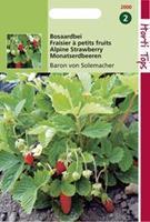 Hortitops Aardbeien Fragaria vesca Baron Van Solemacher (Rügen) - Fruitzaden - 0,25gram