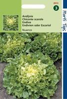 Hortitops Andijvie Cichorium endivia Nuance - Groentezaden - 1g