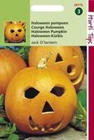 Hortitops Pompoenen Cucurbita pepo Jack O'Lantern (Cucurbita Pepo) - Groentezaden - 2gram