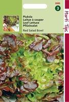 Hortitops Eikenbladsla Lactuca sativa Red Salad Bowl - Groentezaden - 2gram