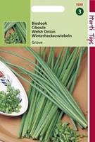 Hortitops Bieslook Grove Allium Fistulosum