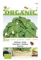 Buzzy Basilicum Ocimum basilicum Genovese - Kruidenzaden - 1g