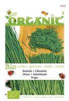 Buzzy Bieslook Allium fistulosum Prager - Kruidenzaden - 0,4gram