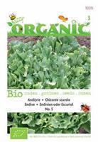 Buzzy Andijvie nr 5 Chichorum endiva - Groentezaden - 2gram