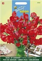 Buzzy Lathyrus odoratus Royal Family Rood