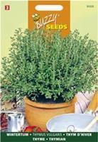 Buzzy Tijm Echte Winter Thymus vulgaris