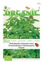 Buzzy Organic Marjolein - Oregano (Skal 14725) Tuinplus