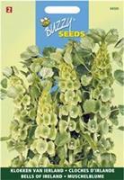 Buzzy Molucella Groene Bel Achtige Bloemen