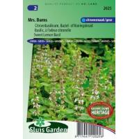 Citroen basilicum zaden Mrs. Burns