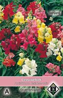 Van Hemert & Co Antirrhinum majus Rainbow Mix