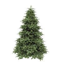 Triumph Tree Abies Nordmann de Luxe Green 230