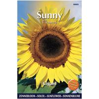 Praxis Sunny flowers gigant