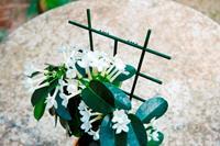 Nature kamerplantenrekjes 37x23 cm 2 stuks