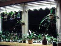 Parus Linear langwerpige kweeklamp led wit 30 graden 75w 120cm