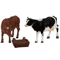 Feeding Cow Bull