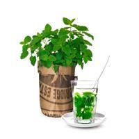Seeds en tea garden bio citroenmelisse