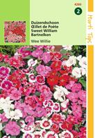 hortitops Dianthus Barbatus Wee Willie Gemengd