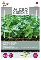 buzzy Microgreens Citroenbasilicum