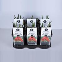 plantenwinkel.nl Rozenstruik Red Meilove - C3 - 1 stuks