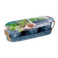 baltusbloembollen Baltus Herb Festival Jeans per 3 giftbox