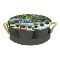 baltusbloembollen Baltus Herb Festival Grijs per 7 giftbox