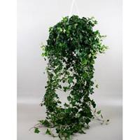 plantenwinkel.nl Hedera helix wonder M hangplant