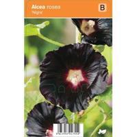 plantenwinkel.nl Stokroos Rozenstruik Nigra zomerbloeier - 12 stuks