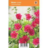 plantenwinkel.nl Stokroos Rozenstruik Carmine Rose zomerbloeier - 12 stuks