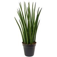 plantenwinkel.nl Sansevieria spikes XL kamerplant
