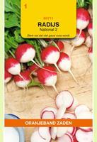 Oranjeband Radijs National 2 Raphanus sativus - Radijs - 10gram