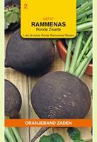 Oranjeband Rammenas Ronde Zarte Raphanus sativus - Overige groenteplanten - 10gram