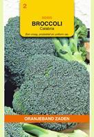 Oranjeband Broccoli Calabria Brassica oleracea - Broccoli - 1g