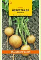 Oranjeband Rapen Goldana Brassica rapa - Overige groenteplanten - 10gram