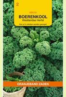 Oranjeband Boerenkool Westlandse herfst Brassica oleracea - Kool - 3gram