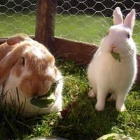 arcelormittal Kippengaas & konijnengaas