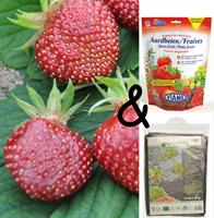 Bloembollenkopen Teeltpakket Aardbei Cherryberry (1 stuks)