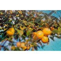 Tuinnet Mono Groen Maaswijdte 6x6mm 7,5 G/m2 5x4m