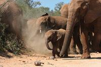 Individuele rondreis Zuid Afrika & Mozambique